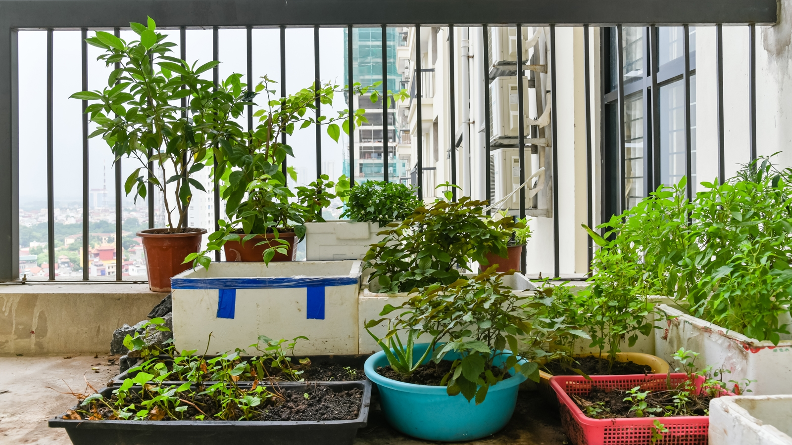 Piante Aromatiche Terrazzo : Verdure e piante aromatiche a km sul balcone pao